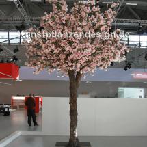 027_magnolienbaum_h_500cm___dm_350cm