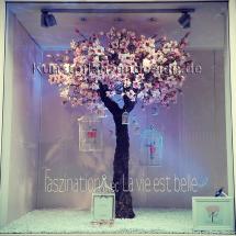 035_magnolienbaum_h_300cm_dm_200cm_2